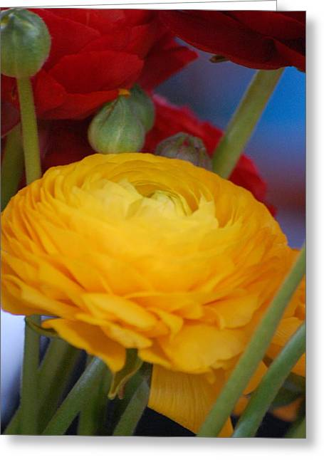 Yellow Beauty Greeting Card by Dickon Thompson