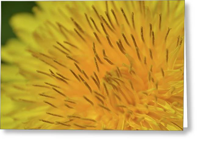 Greeting Card featuring the photograph Yellow Beauty by JD Grimes