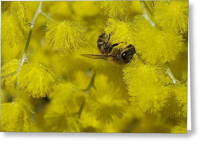 Yellow Bee Greeting Card