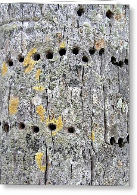 Yellow Bellied Sapsucker And Coconut Palm Greeting Card
