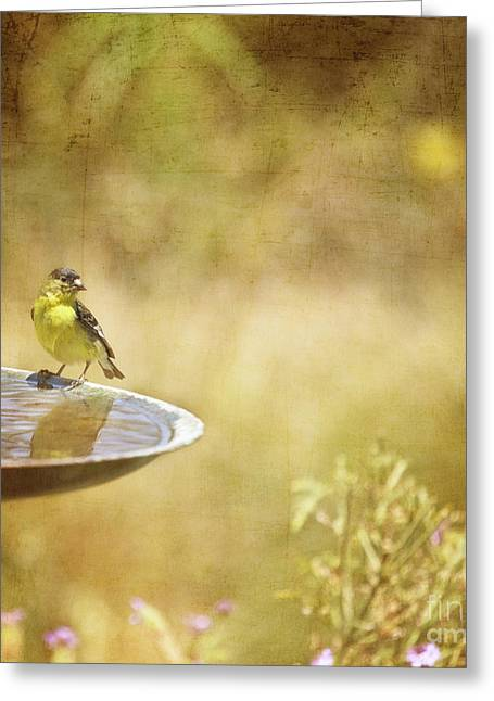 Yellow Bird Upon A Fountain Greeting Card