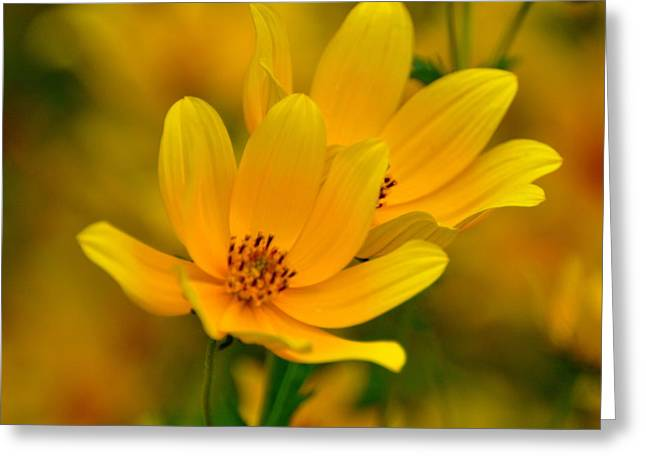 Greeting Card featuring the photograph Yellow Blaze by Marty Koch