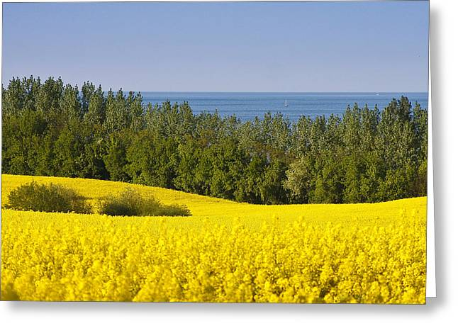 Yellow Blue Green Greeting Card