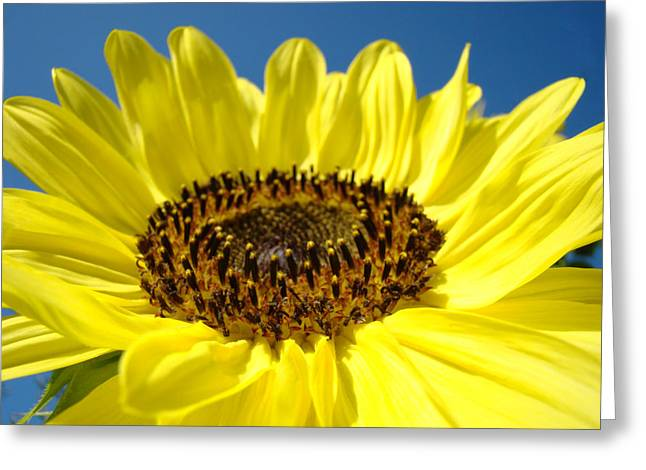 Yellow Bright Floral Sunflower Art Print Blue Sky Greeting Card by Baslee Troutman