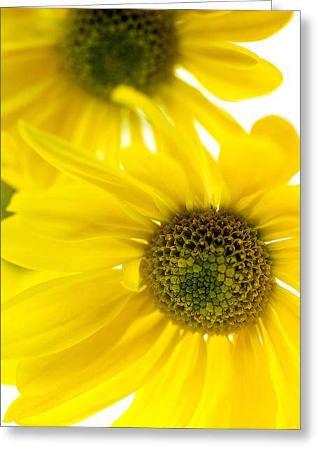Yellow Bright Yellow Greeting Card by Brad Rickerby
