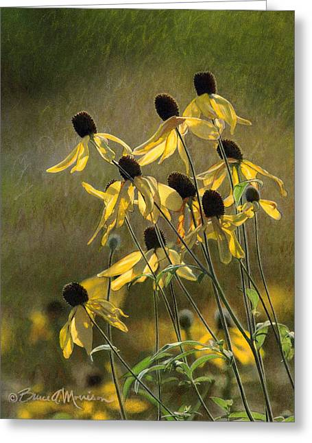 Yellow Coneflowers Greeting Card by Bruce Morrison