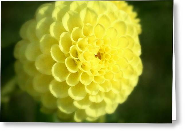 Yellow Dahlia Greeting Card by Cathie Tyler