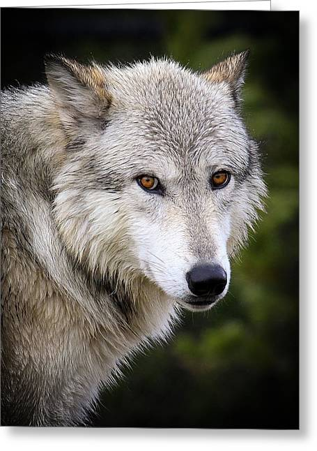 Yellow Eyes Greeting Card by Steve McKinzie