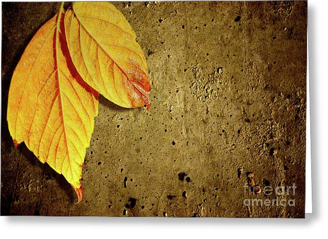 Yellow Fall Leafs Greeting Card