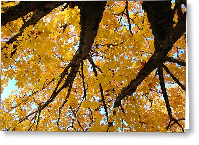 Yellow Fall Trees Prints Autumn Leaves Greeting Card by Baslee Troutman
