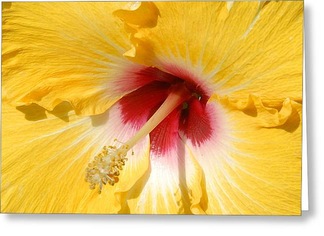 Greeting Card featuring the photograph Yellow Fellow by Cindy Manero