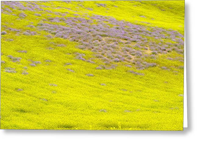 Yellow Fields Greeting Card by Guido Montanes Castillo