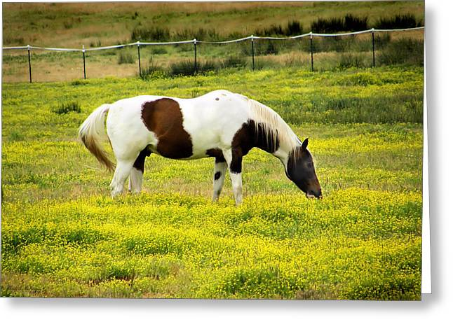 Yellow Fields Horse Greeting Card