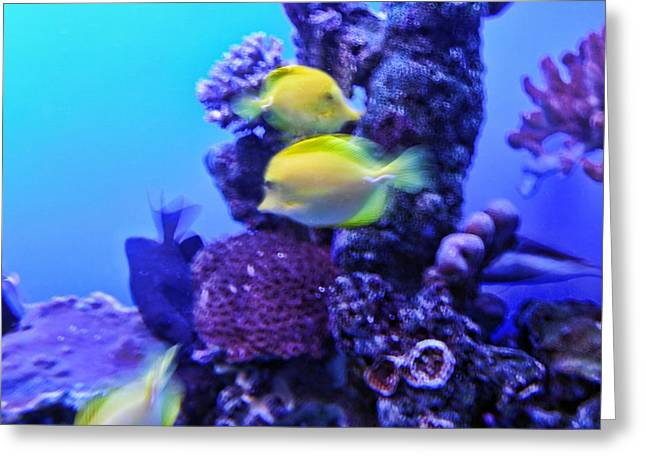 Yellow Fish With Purple Coral Greeting Card by Linda Phelps