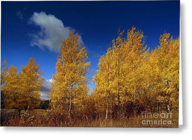Greeting Card featuring the photograph Yellow Flash by Irina Hays