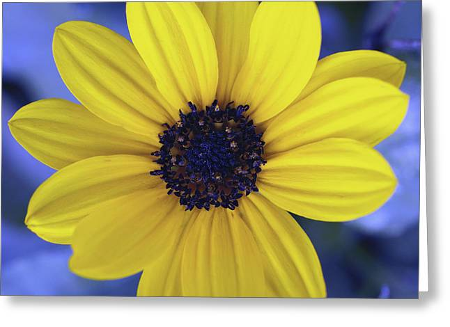 Yellow Flower 3 Greeting Card by Skip Nall