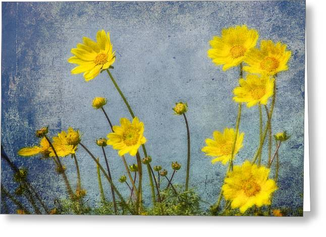 Randy Greeting Cards - Yellow Flower Blossoms Greeting Card by Randall Nyhof