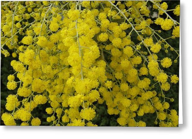 Yellow flower bulbs photograph by far i shields yellow flower bulbs greeting card by far i shields mightylinksfo