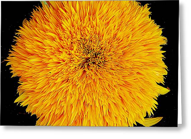 Greeting Card featuring the photograph Yellow Flower by Elvira Ladocki