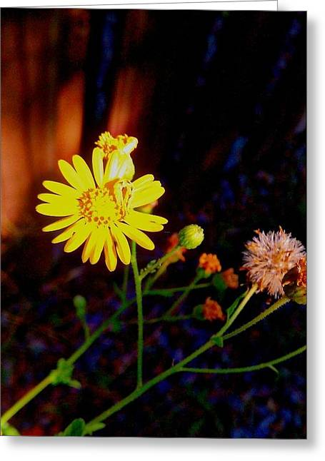 Yellow Flower Greeting Card by Jessica Thomas