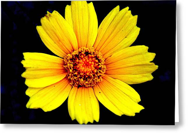 Yellow Flower Greeting Card by Marty Koch