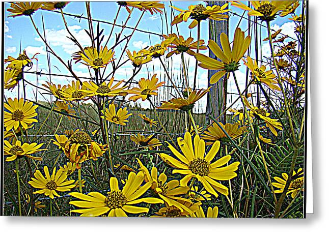 Greeting Card featuring the photograph Yellow Flowers By The Roadside by Alice Gipson