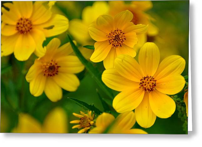 Greeting Card featuring the photograph Yellow Flowers by Marty Koch