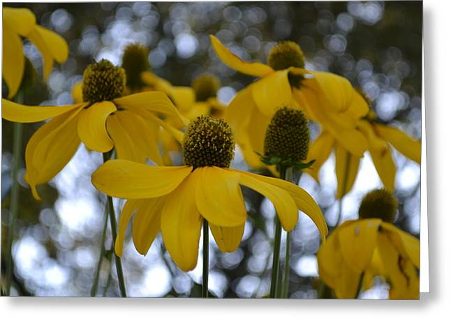 Yellow Flowers Greeting Card by Naomi Berhane