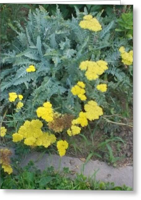 Yellow Garden Flowers And Green Ferns Greeting Card by Thelma Harcum