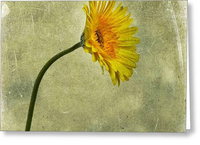 Yellow Gerbera Greeting Card by Bernard Jaubert