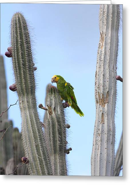 Yellow-headed Amazon Parrot, Amazona Greeting Card by George Grall