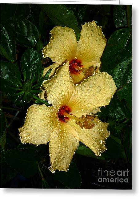 Greeting Card featuring the photograph Yellow Hibiscus After The Rain by Renee Trenholm