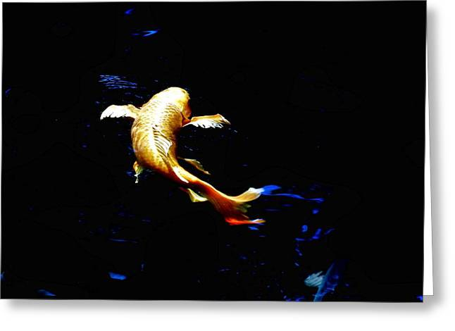 Yellow Koi Greeting Card by Don Mann