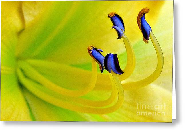 Yellow Lily Greeting Card by Judi Bagwell