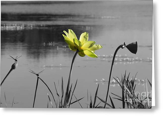 Greeting Card featuring the photograph Yellow Lotus by Deborah Smith