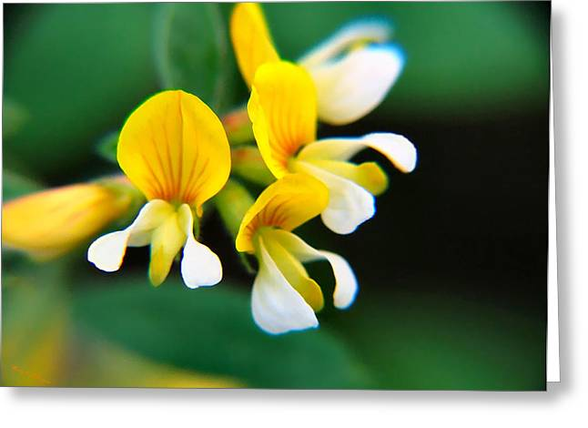 Greeting Card featuring the photograph Yellow Macro by Wendy McKennon