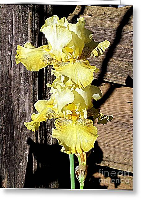 Greeting Card featuring the photograph Yellow On Brown by Irina Hays