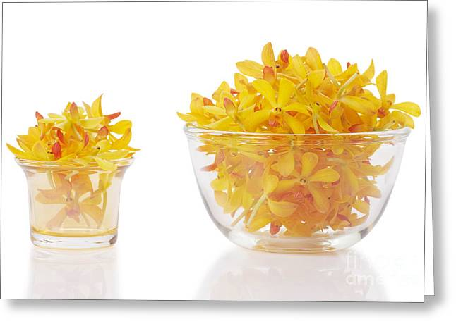 Yellow Orchid Heads Greeting Card by Atiketta Sangasaeng