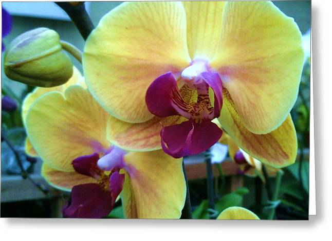 Yellow Orchid In It's Own Glory Greeting Card by Shawn Hughes