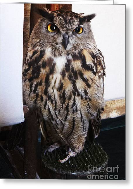 Yellow Owl Eyes Greeting Card