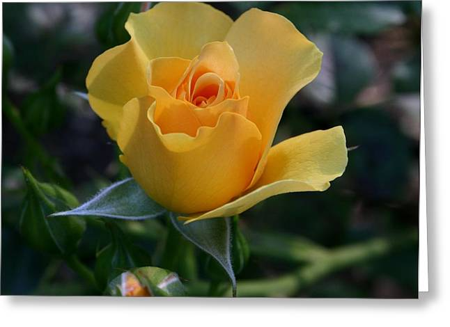 Yellow Queen Greeting Card by Valia Bradshaw