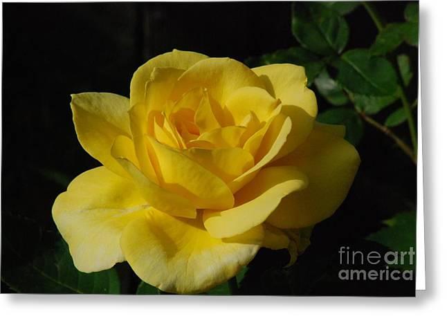 Yellow Rose Close Up Greeting Card