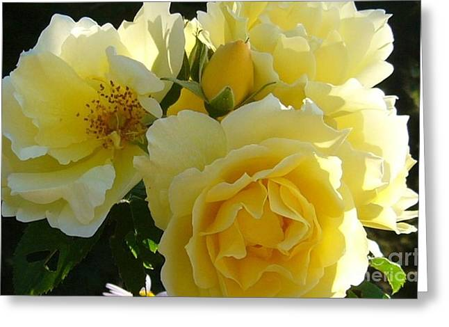 Greeting Card featuring the photograph Yellow Rose by Jim Sauchyn