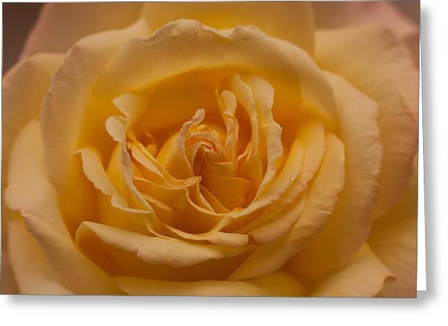Yellow Rose Greeting Card