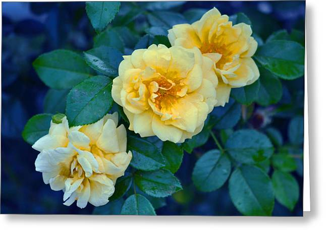 Greeting Card featuring the photograph Yellow Roses by Rodney Campbell