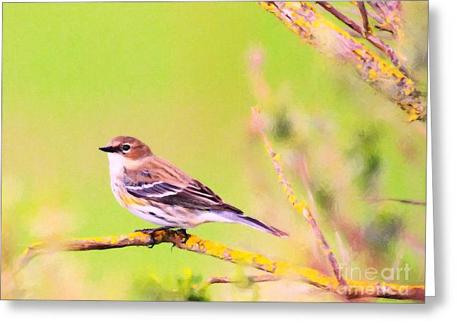 Yellow-rumped Warbler . Painterly Greeting Card by Wingsdomain Art and Photography