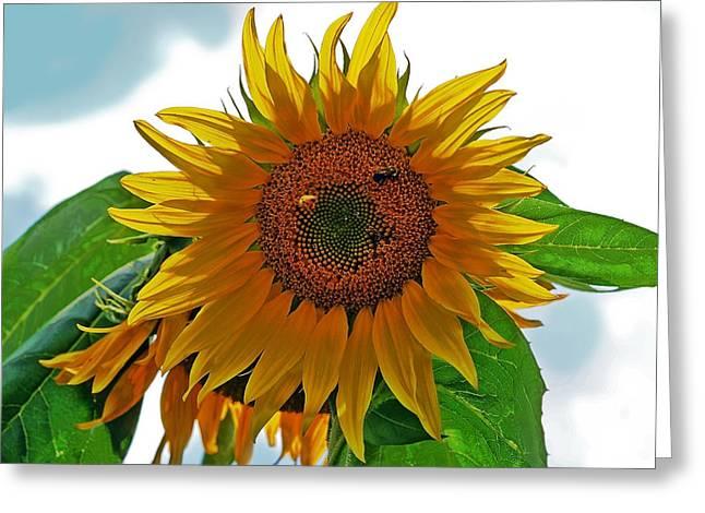 Yellow Sunflower Greeting Card by Susan Leggett