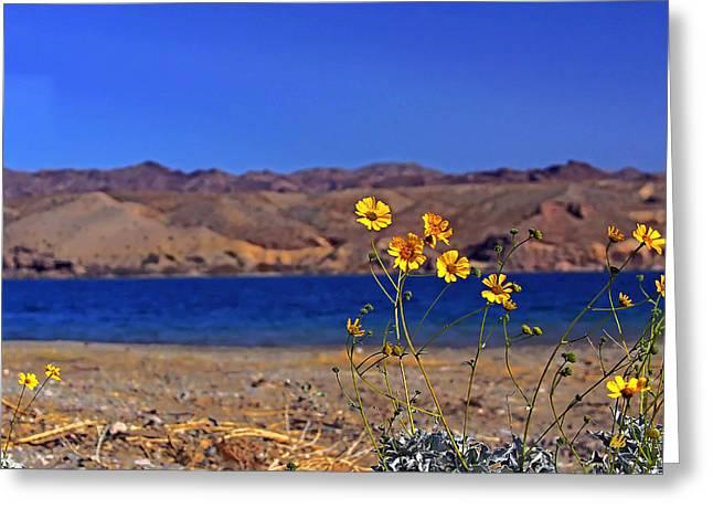 Yellow Sweet... Greeting Card by Bonnie Stillman