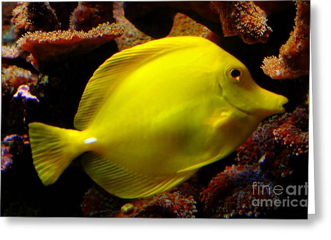 Yellow Tang Greeting Card by Pravine Chester