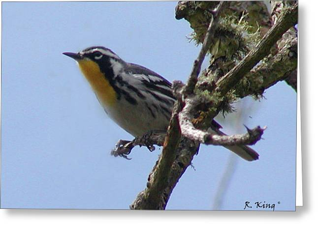 Greeting Card featuring the photograph Yellow-throated Warbler by Roena King